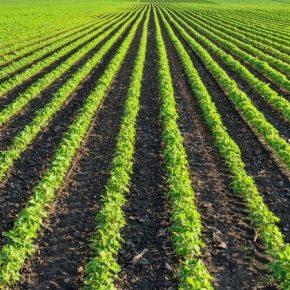 Эффективный гербицидный контроль позволяет сохранить до половины урожая сои — эксперт