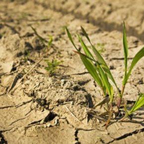 За гектар утраченных посевов государство компенсирует аграриям 5 тыс. грн — Минэкономики