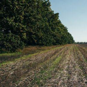 На Николаевщине вновь обнаружили незаконные вырубки лесополос