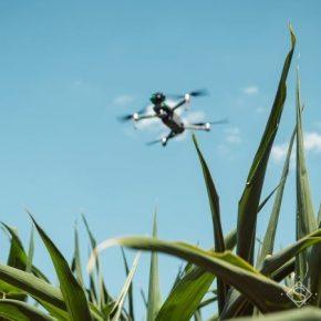 Использование беспилотников в сельском хозяйстве будет урегулирован на законодательном уровне