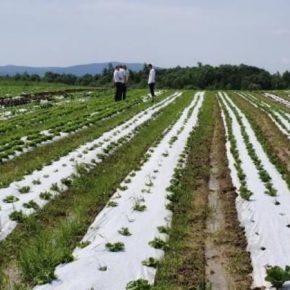 На Львовщине будут развивать органическое сельхозпроизводство