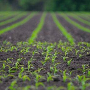 Разработана методика количественной оценки биопестицидов в почве