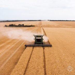 В Минэкономики озвучили прогноз на урожай зерна в Украине