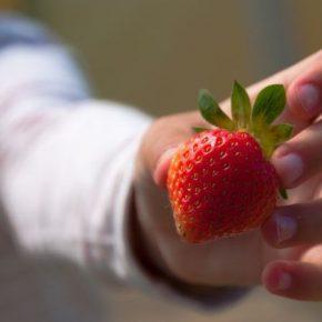 В Украине растет инвестиционная привлекательность ягодного бизнеса — аналитики