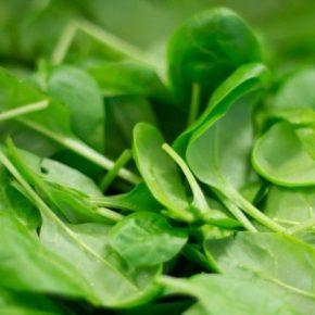 Семейное хозяйство выращивает на Тернопольщине органическую зелень