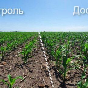 Аграриям продемонстрировали эффект от фульвових кислот на кукурузе