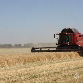На Луганщине выросла средняя урожайность ранних культур — агроном