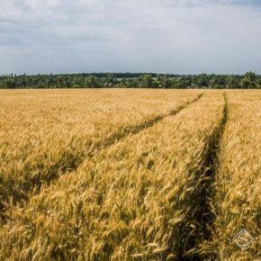 Запасы продуктивной влаги на полях различных регионов оцениваются как неравномерные — НААН