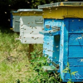 В Парламенте зарегистрировали законопроект об уголовной ответственность за отравление пчел