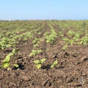 Аграрии Прикарпатья наращивают площади посева сельхозкультур