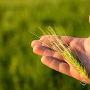 В ALFA Smart Agro рассказали, как через форвардные контракты выгодно реализовать урожай
