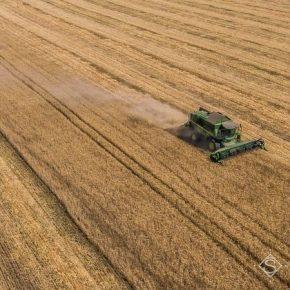 На Прикарпатье прогнозируют увеличение валового сбора ранних зерновых