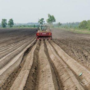 В Украине презентовали программу по развитию промышленного картофелеводства