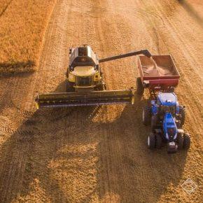В Винницкой области снизилась средняя урожайность пшеницы и ячменя
