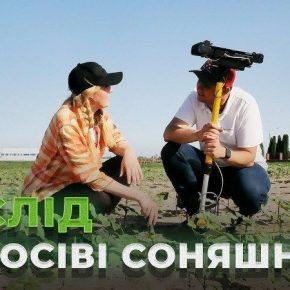 Аграриям рассказали, как подобрать оптимальные условия сева подсолнечника — практический опыт Digital Field