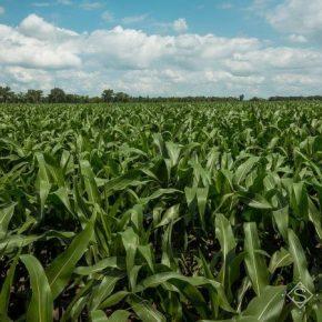 Июльские дожди способствовали существенному пополнению запасов продуктивной влаги в почве