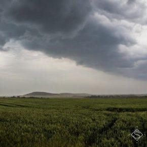 Чрезмерные осадки нанесли ущерб сельхозкультурам на Хмельнитчине