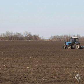 Вырубка лесополос на Николаевщине усиливает ветровую эрозию на полях региона