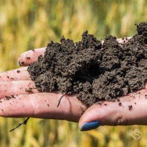 Украина требует внедрения новой стратегии сохранения и рационального использования почв, — ученые