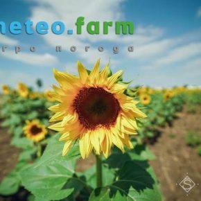 На территорию Украины возвращается жара — прогноз погоды