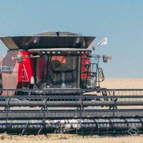 По итогам жатвы на Сумщине выросла средняя урожайность ранних культур