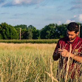 В США зарегистрирован первый в мире коммерческий промежуточный продовольственный сорт пшеницы