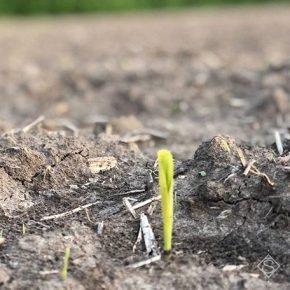 Микоризные препараты могут помочь растениям справиться со стрессом, вызванным засухой, — эксперт