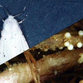 На Тернопольщине выявлены новые очаги распространения регулируемых вредных организмов