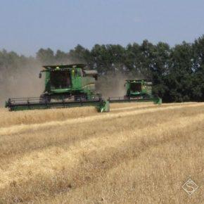 Прогнозы по урожаю ранних зерновых в Винницкой области не оправдались