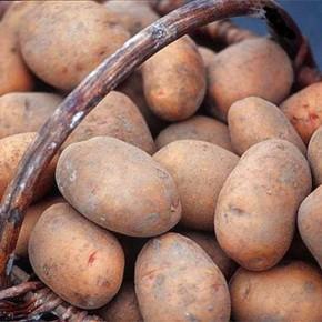 Сорта картофеля :Казна и Щедрик