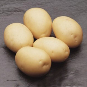 Сорта картофеля, проверенные на практике