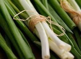 Как правильно выращивать лук -благоприятные дни в 2013 году
