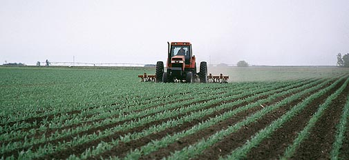 Кукуруза в севообороте