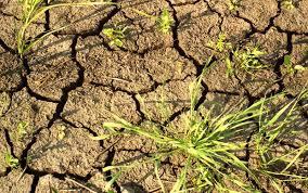 Как защитить огород от засухи