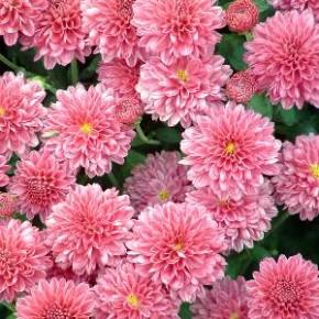 Многообразие видов цветов
