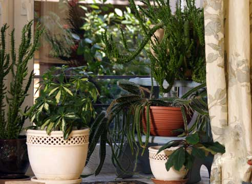 Уход за домашними растениями