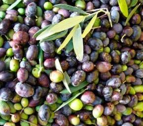 Уход за ягодниками: правильное обрезания - высокий урожай