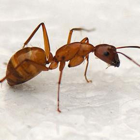 Средства борьбы с муравьями:химические препараты
