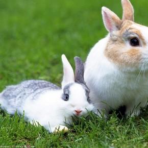 Зачем кролики едят свой помет?