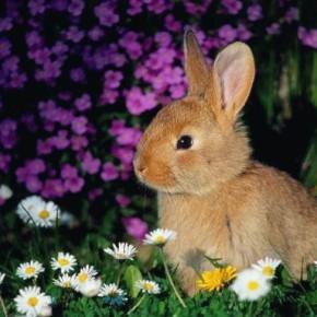 Фестал для кроликов: экскременты для  нормального пищеварения