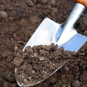 Как избавиться от сорняков при осенней подготовке к зиме?
