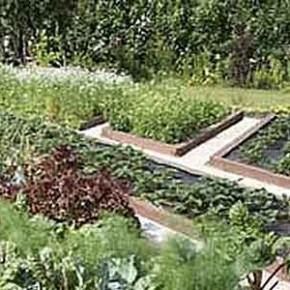 Применение микробиологических препаратов в органическом земледелии
