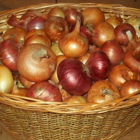 Чтобы вырастить хороший урожай-нужно приобрести высококачественные и урожайные семена