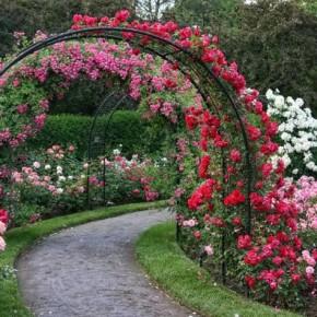 Грибковы заболевания роз:какие препараты применять