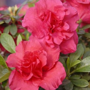 Какие растения цветут на подокрннике зимой?