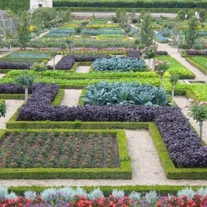 Как высевать овощи на французском огороде?