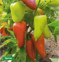 Выращивание перца:как сохранить влагу