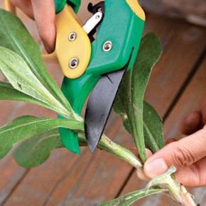 Как размножать растения черенкованием?