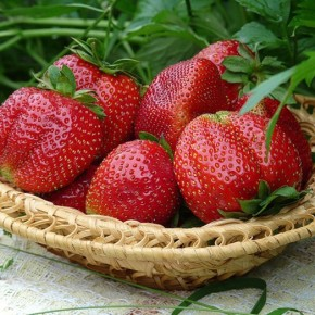 Как сделать ягоды клубники большими:советы садовода