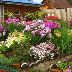 Высаживание рассады цветов на грядку:советы по доращиванию